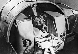 Uzaya gönderilen hayvanlar