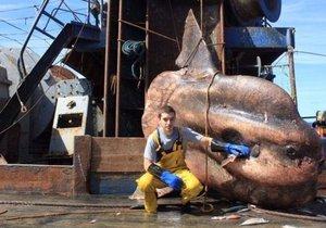 İşte derin ve korkutucu deniz canlıları