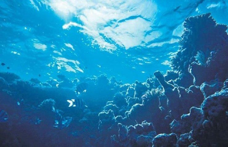 Okyanusta müthiş bir keşif