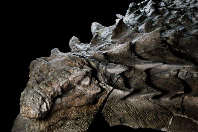 110 milyon yıllık 'ejderha' iddiası