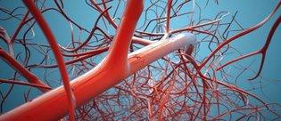 Tarihi gelişme: 3D yazıcıyla işlevsel damar ağı oluşturuldu!