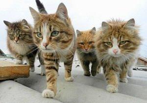 Stil sahibi ve sıkı dost olan sevimli hayvanlar