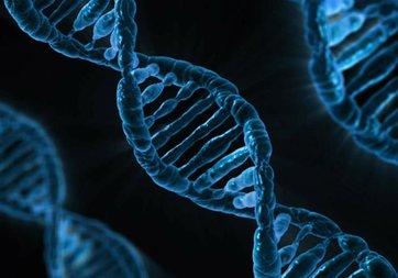 Tüketilen gıdanın DNA'ya 'net' etkileri ortaya çıktı