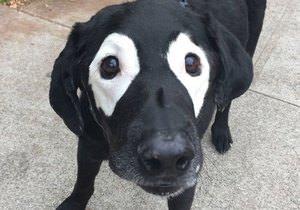 Photoshop savaşı başlatan sevimli köpek
