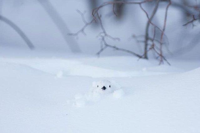 Kış mevsiminde hayvanlar alemi