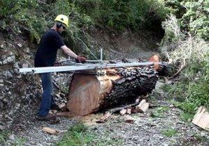 Dev ağaçtan yaptığı şey şok edecek!