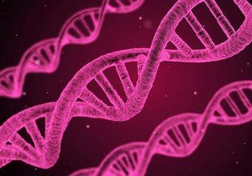 İnsan yüzünü belirleyen 15 gen tespit edildi