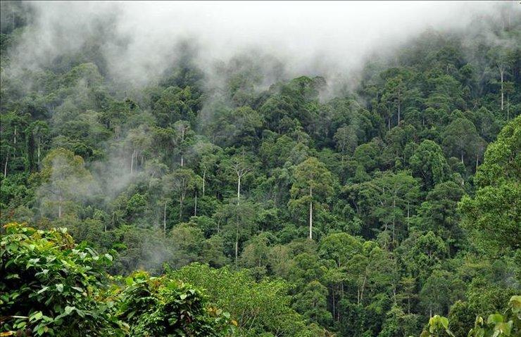AMAZONLAR'DA KURAKLIK ÖYLE BİR İŞE YARIYOR Kİ...