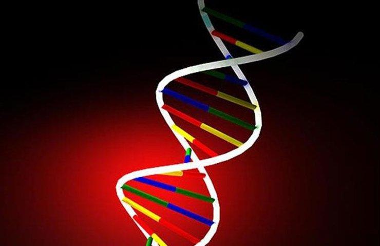BAKTERİ DNA'SINA HAREKETLİ GÖRÜNTÜ KAYDEDİLDİ