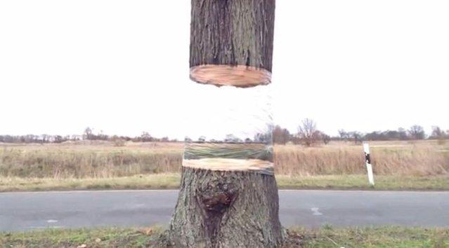 Ağaçların belli bölümlerini görünmez yaptılar