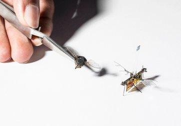 Kürdan ağırlığında robot böcek geliştirdiler