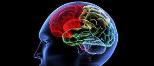 Beyin yaşınızı hesaplamak ister misiniz?