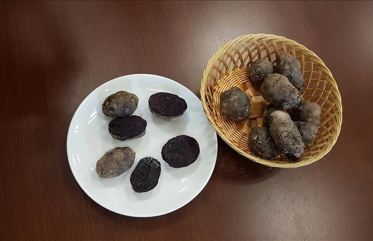 Niğde'de 'mor patates' çeşidi geliştirildi