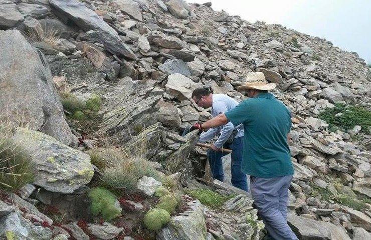 Türkiye'den bitki literatürüne beş yeni bitki türü