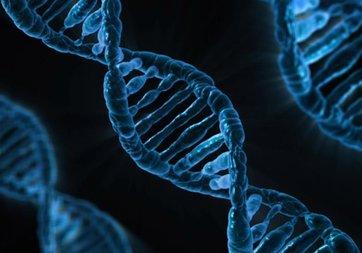 Yeryüzündeki milyonlarca canlının genom haritası çıkarılacak