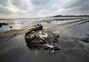 16 bin bilim insanından Dünya çevre felaketi uyarısı