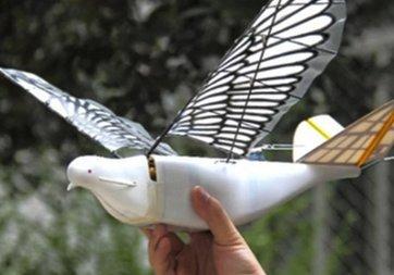 Yeni nesil robot kuşlar uçmaya başladı