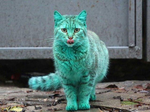Bulgaristan'daki 'yeşil kedi'nin sırrı çözüldü