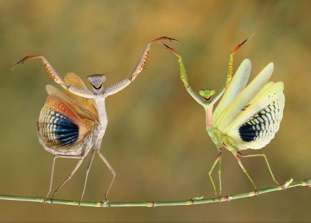 2014 National Geographic Fotoğraf Yarışması'ndan en iyi fotoğraflar