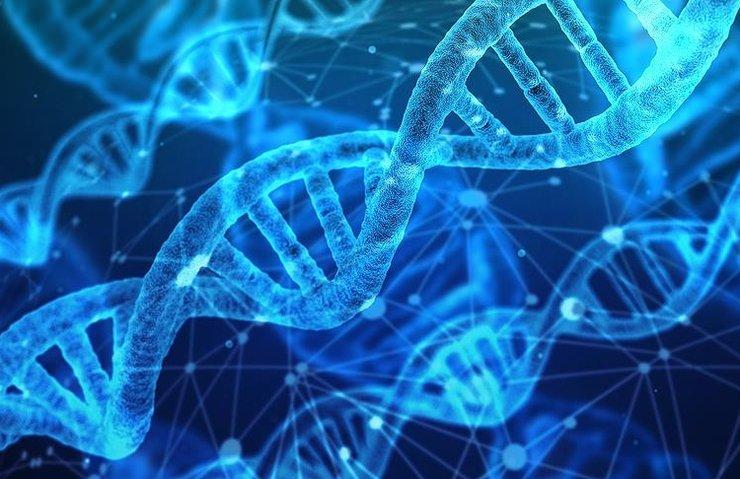 DNA YAŞAM SÜRESİ HAKKINDA İPUÇLARI VERİYOR