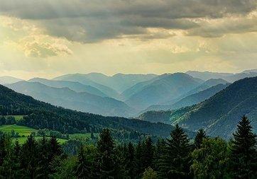 Yeni harita orman kayıplarının nedenini ortaya koyuyor