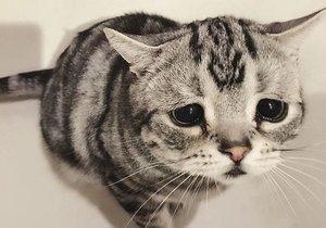 Dünya'nın en üzgün kedisi Luhu ile tanışın