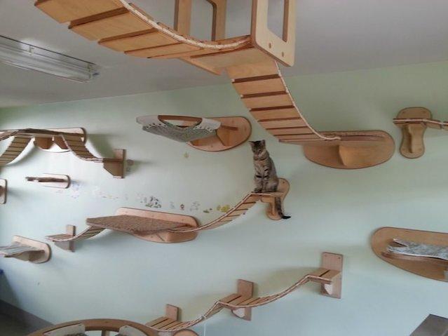 Kediler için oyun odası