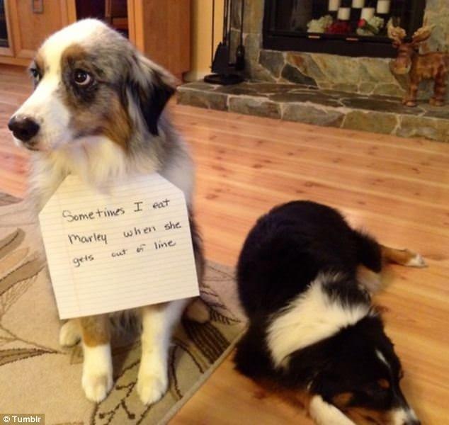 Dogshaming: Yaramaz köpekleri afişe eden internet akımı