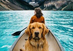Sosyal medyanın yeni fenomeni bir köpek: Aspen