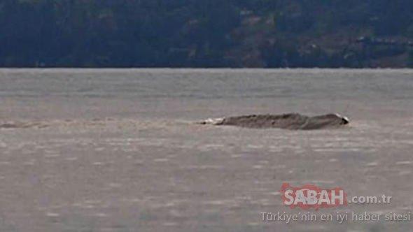 Kanada'nın gizemli canavarı tekrar ortaya çıktı!