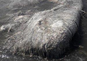 210 yıllık mitolojik canavar kıyıya vurdu!