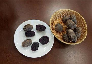 Niğde'de 'mor patates' geliştirildi